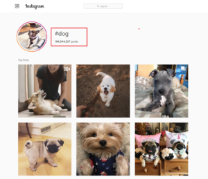 Dog Hashtags (to copy and paste) on Instagram to make your