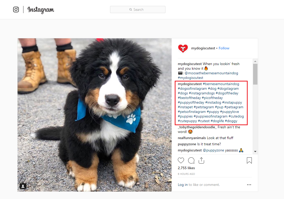 Dog Hashtags (to copy and paste) on Instagram to make your dog